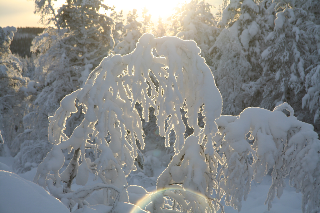 Solen i samarbete med snön. Foto Torbjörn SAndling